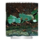 Leafcutter Ants Shower Curtain