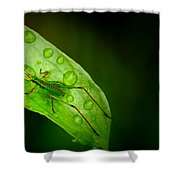 Leafhopper 2 Shower Curtain