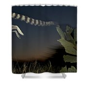 Leaping Ring-tailed Lemur  Shower Curtain