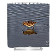 Least Sandpiper Shower Curtain