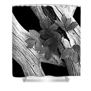 Leaves And Driftwood Bw Shower Curtain