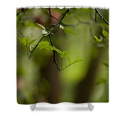 Leaves And Thorns Shower Curtain