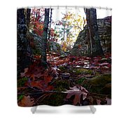 Leaves In The Forest Shower Curtain