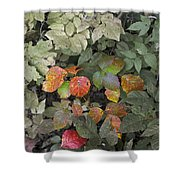 Leaves Of Three   Let It Be Shower Curtain