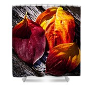 Leaves On The Deck Shower Curtain