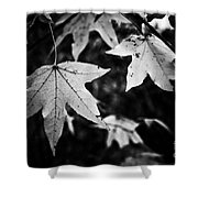 Leaves Without Color Shower Curtain