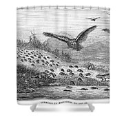 Lemming Migration Shower Curtain