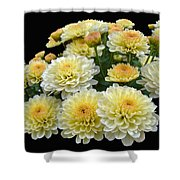 Lemon Meringue Chrysanthemums Shower Curtain