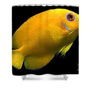 Lemonpeel Angelfish Shower Curtain