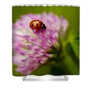 Lensbaby Ladybug On Pink Clover Shower Curtain