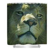 Leo,lion Shower Curtain
