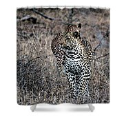 Leopard Hunt Shower Curtain