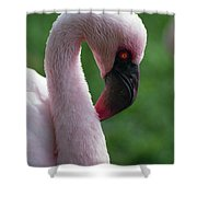 Lesser Flamingo Shower Curtain