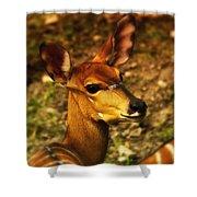 Lesser Kudu Shower Curtain