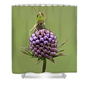 Lesser Marsh Grasshopper Chorthippus Shower Curtain