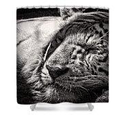 Let Sleeping Tiger Lie Shower Curtain