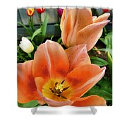 Lets All Dance For The Tulips Are Out Shower Curtain