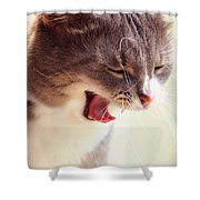 Lets Go Sleeping. Kitty Time Shower Curtain