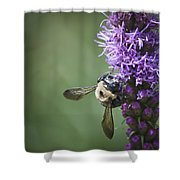 Liatris And Bee Squared 2 Shower Curtain