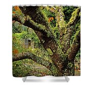 Lichen Covered Apple Tree, Walled Shower Curtain