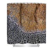 Lichen Pattern Series - 11 Shower Curtain