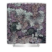 Lichen Pattern Series - 57 Shower Curtain