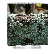 Lichens Lace Shower Curtain