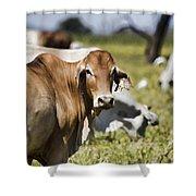 Life On The Farm Shower Curtain