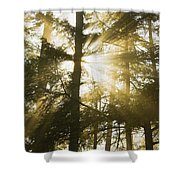 Light Beams Shining Through Trees And Fog Shower Curtain