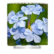 Light Blue Plumbago Flowers Shower Curtain by Carol Groenen