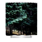 Light Forest Shower Curtain