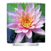 Light Pink Water Lily Shower Curtain