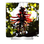 Light Play IIi Shower Curtain