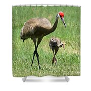 Like Father Shower Curtain