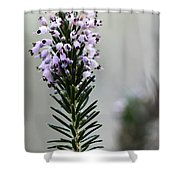 Lil Flower In Lilac Shower Curtain