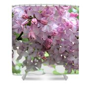 Lilac Blooms Shower Curtain