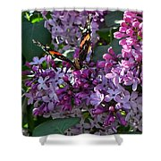 Lilac Butterfly Shower Curtain