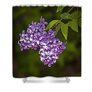 Lilac Flower Blossoms No. 319 Shower Curtain