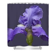 Lilac Iris Shower Curtain