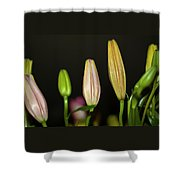 Lilies In A Row Shower Curtain