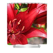 Lilies In Red Shower Curtain