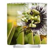Lilikoi Shower Curtain