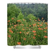 Lillies 2 Shower Curtain