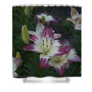 Lillies Shower Curtain