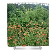 Lillies In The Valley Shower Curtain