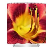 Lilly For A Day Shower Curtain