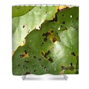 Lilly Tan Line Shower Curtain by Trish Hale