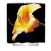 Lilly Shower Curtain