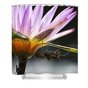 Lilly Visitor Shower Curtain by Lauri Novak