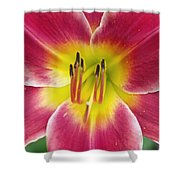 Lilly's Essence Shower Curtain